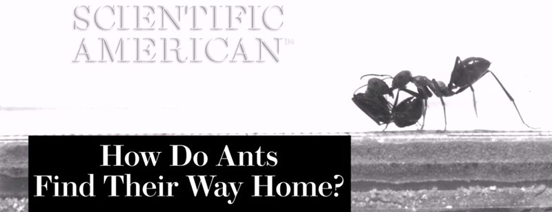 How Do Ants Find Their Way Home