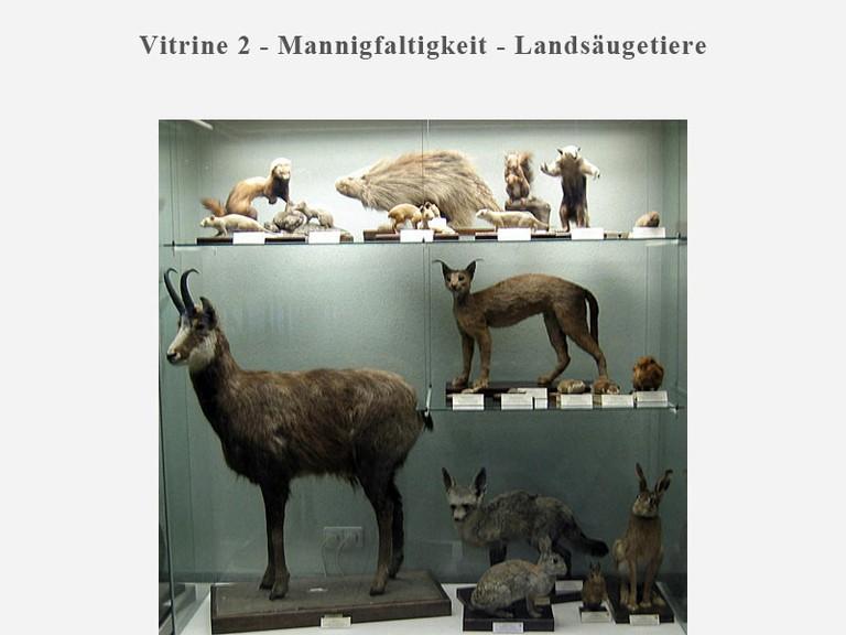 Vitrine 2 - Mannigfaltigkeit - Landsäugetiere - small
